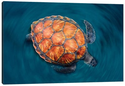 Spin Turtle Canvas Art Print