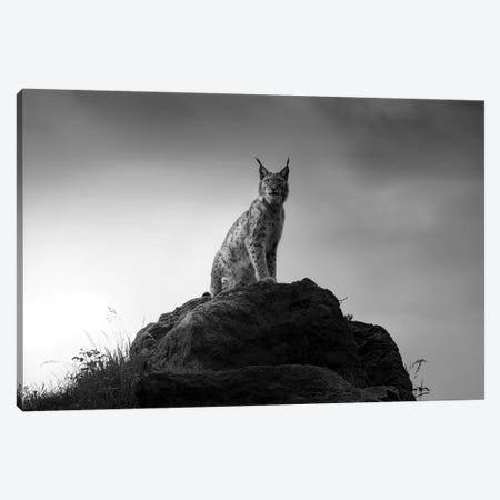 Lynx Drama. Canvas Print #OXM5392} by Sergio Saavedra Ruiz Canvas Art Print