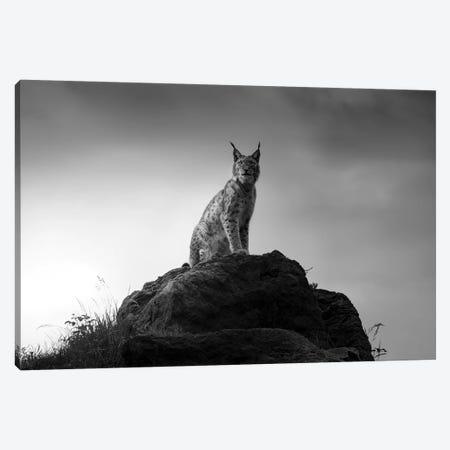 Lynx Drama. Canvas Print #OXM5392} by Sergio Saavedra Ruiz Canvas Art Print