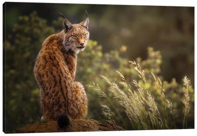 Lynx Fine Art. Canvas Art Print