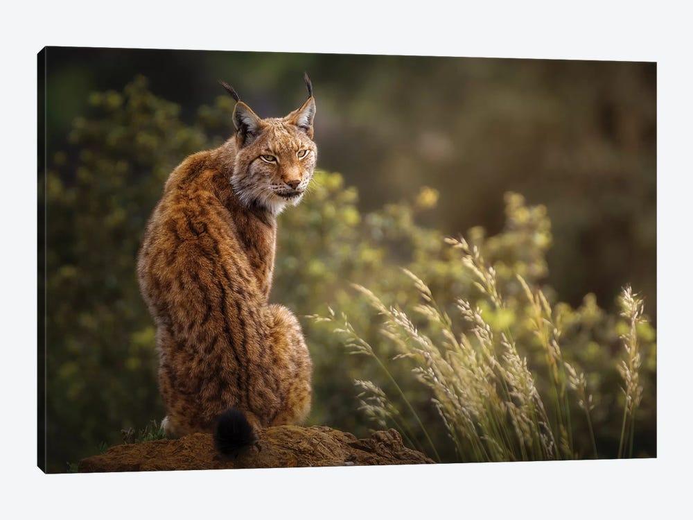 Lynx Fine Art. by Sergio Saavedra Ruiz 1-piece Canvas Print