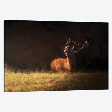 The Deer'S Zeal Canvas Print #OXM5395} by Sergio Saavedra Ruiz Canvas Wall Art