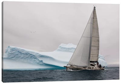 Iced Canvas Art Print