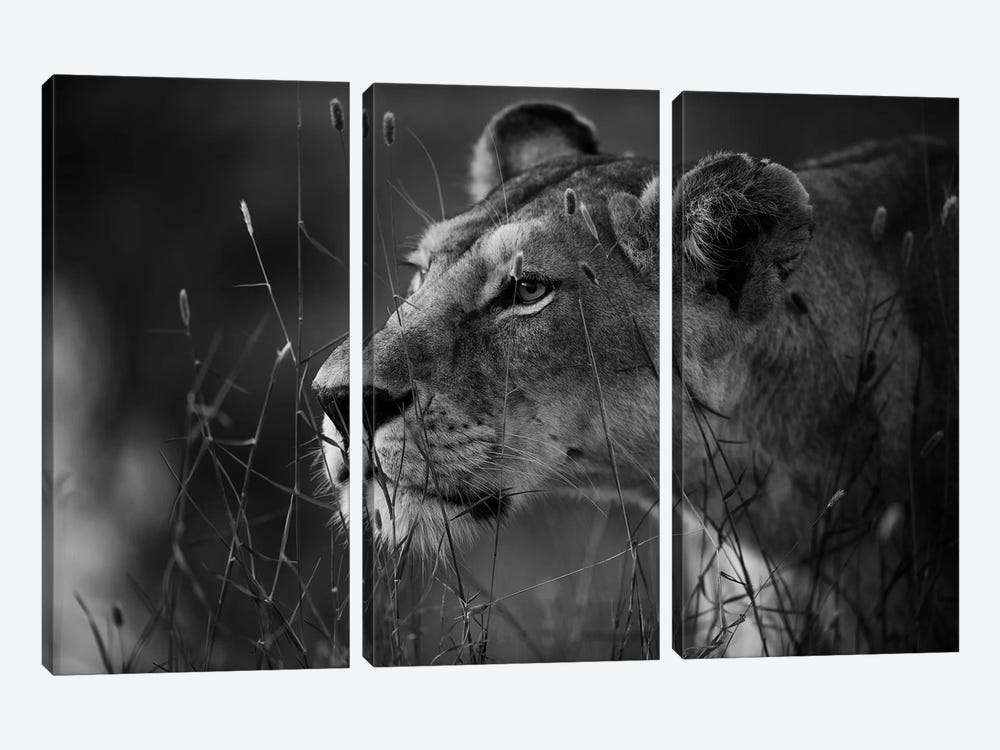 Untitled by Simona Forte 3-piece Canvas Art Print