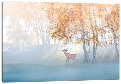 Elk Lost In Mist Canvas Art Print