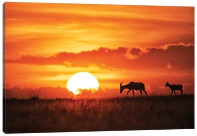 Sun Rise Canvas Art Print