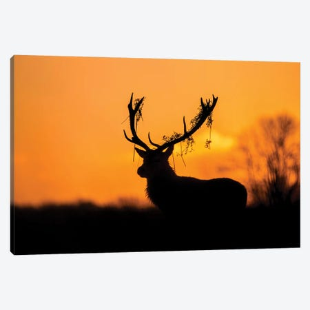 Red Deer Stag Silhouette Canvas Print #OXM5411} by Stuart Harling Canvas Wall Art