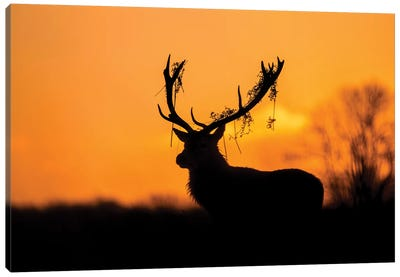 Red Deer Stag Silhouette Canvas Art Print