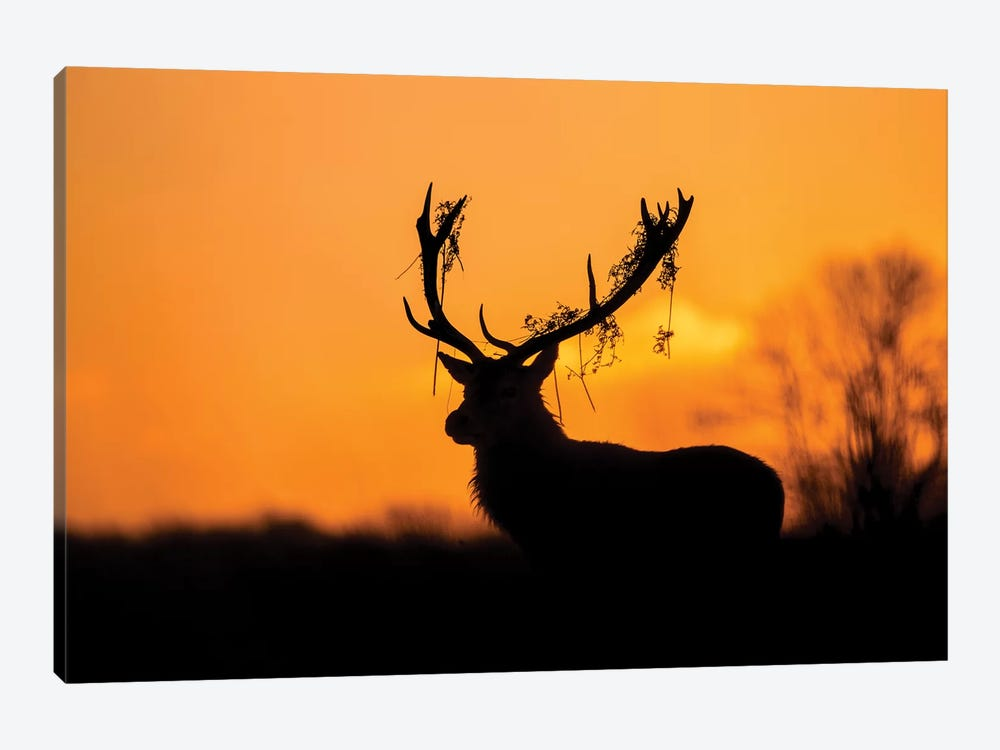 Red Deer Stag Silhouette by Stuart Harling 1-piece Canvas Wall Art