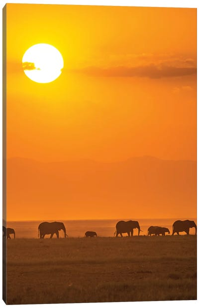 Elephants At Sunset Canvas Art Print