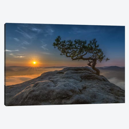 Old Pine Canvas Print #OXM5422} by Thomas Siegel Art Print