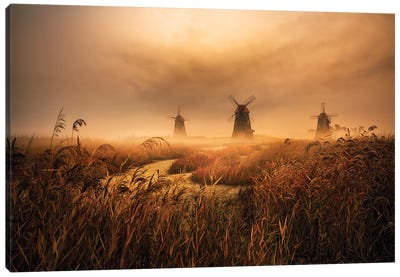 A Fascinating Morning Canvas Art Print