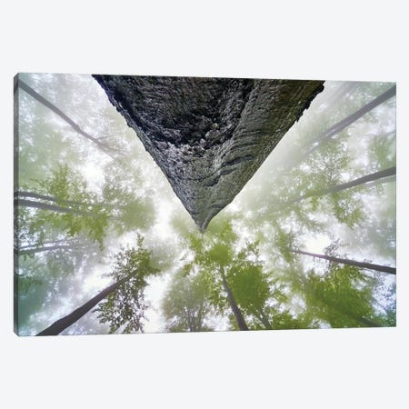 Looking Up Canvas Print #OXM5435} by Tom Pavlasek Art Print