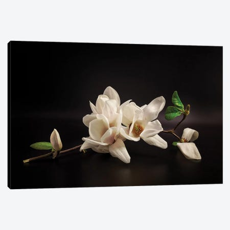 Magnolia Canvas Print #OXM5442} by Tony08 Canvas Art Print