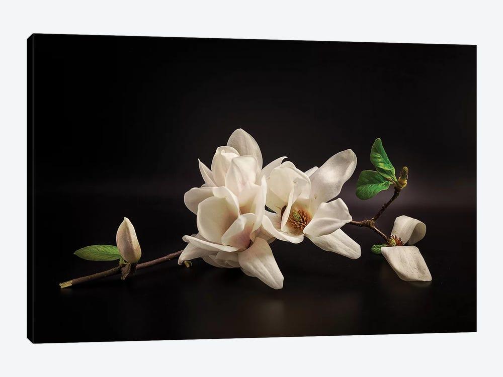 Magnolia by Tony08 1-piece Canvas Artwork