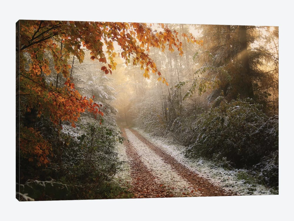 Frosty Fall by Vincent Croce 1-piece Canvas Wall Art