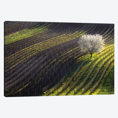 Strings Of Spring 3-Piece Canvas #OXM5459} by Vlad Sokolovsky Canvas Wall Art