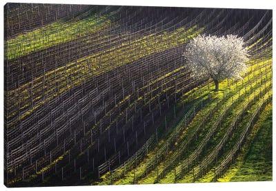 Strings Of Spring Canvas Art Print