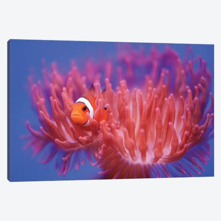 Finding Nemo Canvas Print #OXM5466} by Wendy Canvas Artwork
