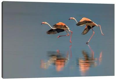 Flamingo Landing Canvas Art Print