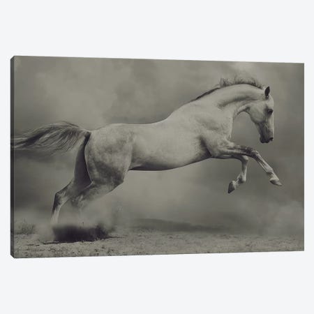 Parical Canvas Print #OXM5491} by Hamze Dashtrazmi Canvas Wall Art
