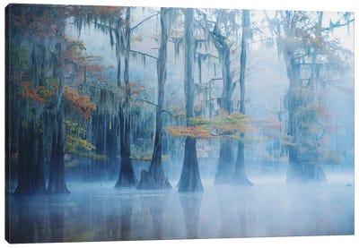 Foggy Swamp Morning Canvas Art Print