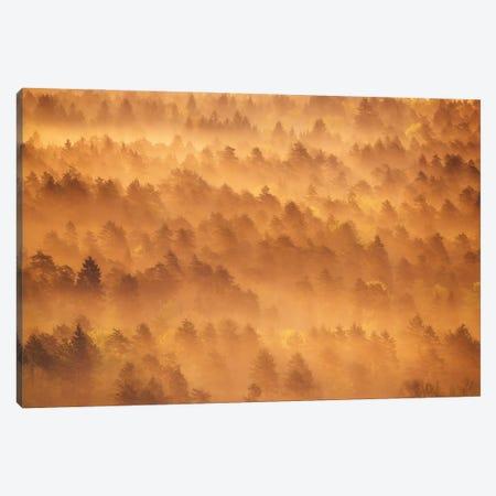 Golden Morning Canvas Print #OXM5504} by Ales Krivec Canvas Print