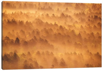 Golden Morning Canvas Art Print