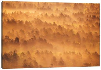 Golden Morning Canvas Art Print