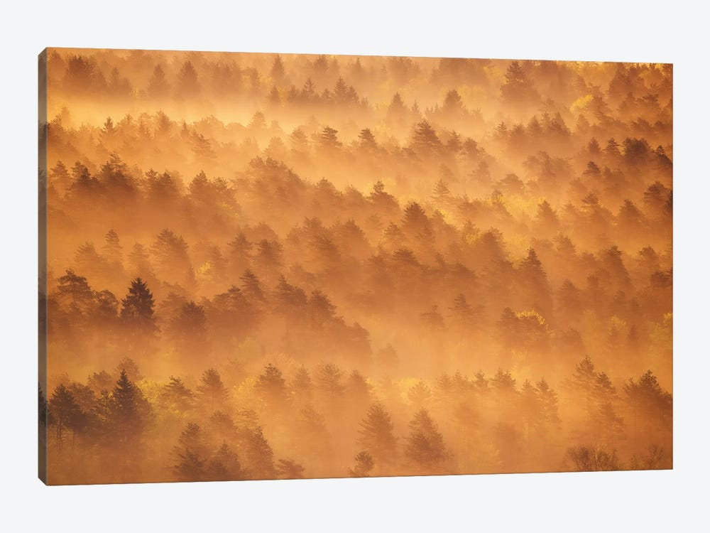 Golden Morning by Ales Krivec 1-piece Canvas Print