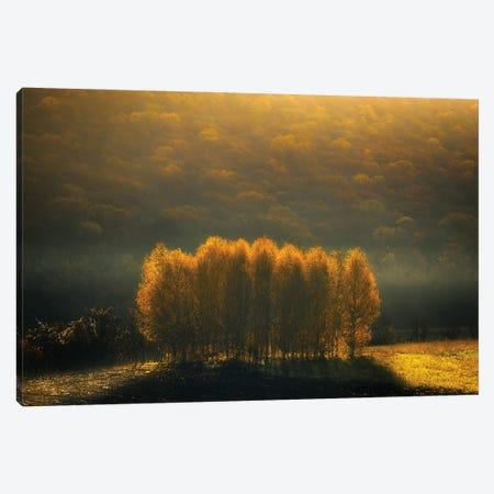 Morning Light Canvas Print #OXM5512} by Anghel Rusu Canvas Print