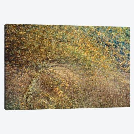 Motion Tree Canvas Print #OXM5515} by Anton van Dongen Canvas Wall Art