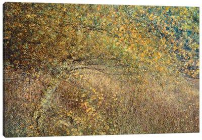 Motion Tree Canvas Art Print