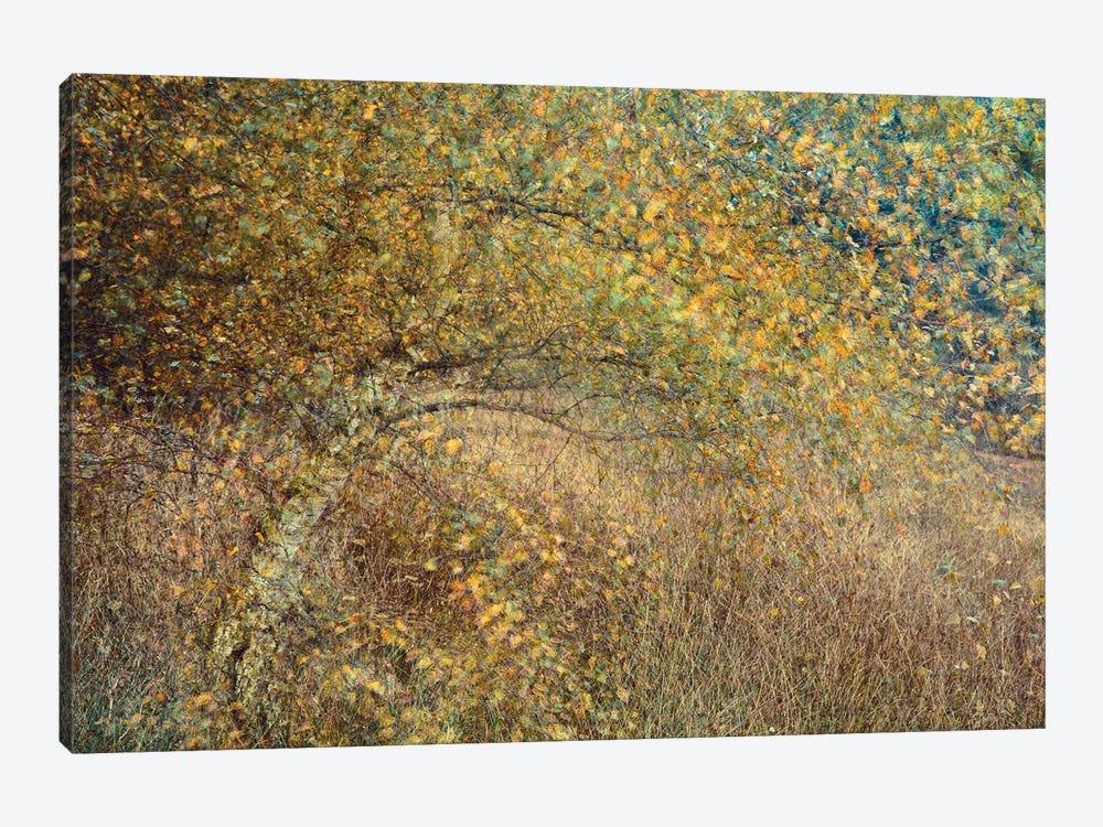 Motion Tree by Anton van Dongen 1-piece Canvas Print