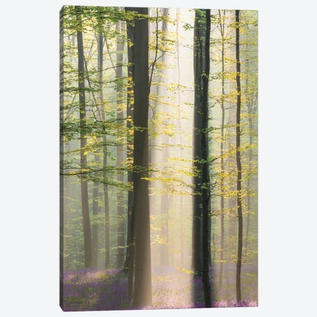 Misty Sunrise In Hallerbos Canvas Print #OXM5546} by Denisa Vlaicu Art Print