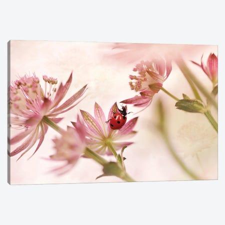 Ladybird And Pink Flowers Canvas Print #OXM5557} by Ellen van Deelen Canvas Art