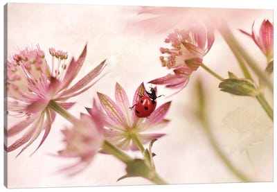 Ladybird And Pink Flowers Canvas Art Print