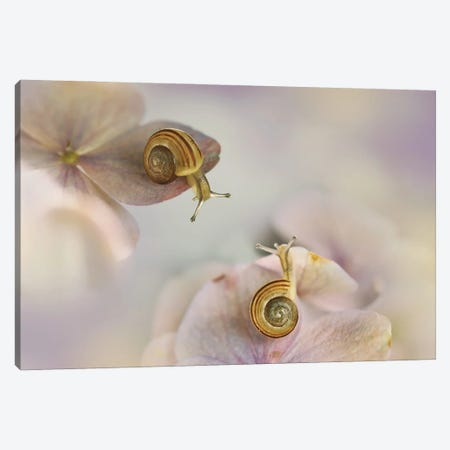 Little Snails Canvas Print #OXM5558} by Ellen van Deelen Canvas Art Print