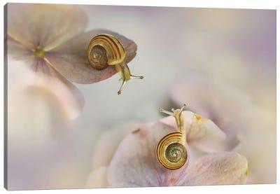 Little Snails Canvas Art Print
