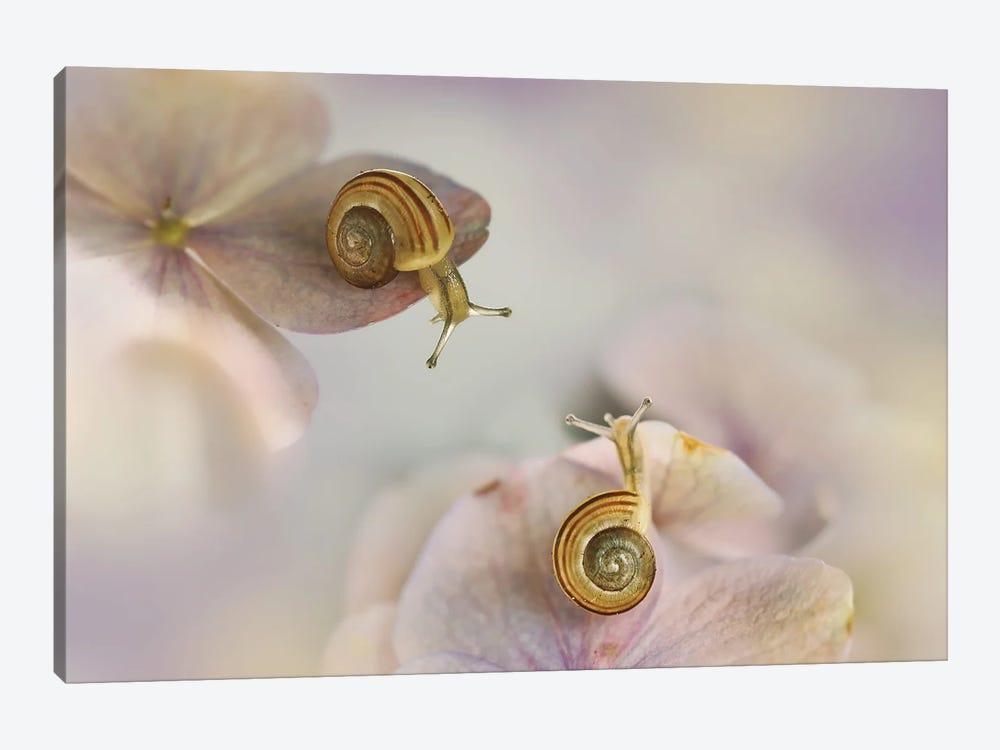 Little Snails by Ellen van Deelen 1-piece Canvas Artwork