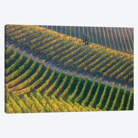 Vineyards Canvas Print #OXM5564} by Fiorenzo Carozzi Canvas Art Print