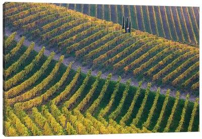 Vineyards Canvas Art Print