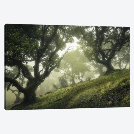 Enchanted Forest Canvas Print #OXM5569} by Frans Van Der Canvas Wall Art