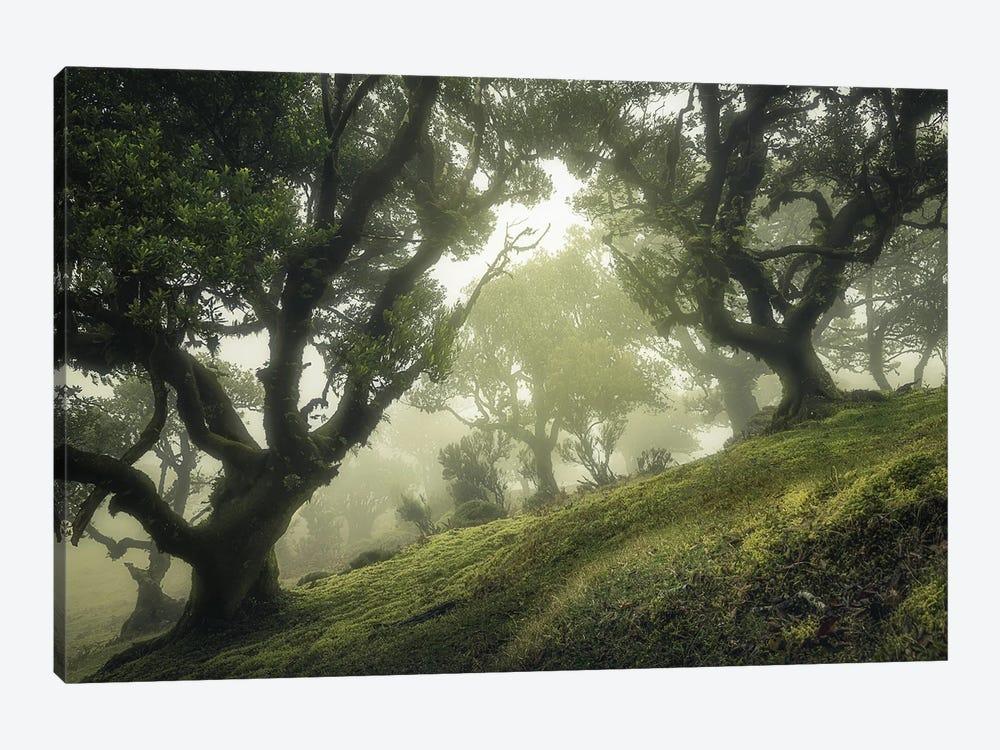 Enchanted Forest by Frans Van Der 1-piece Canvas Art