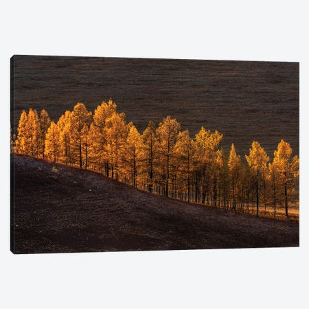 Sunset Light Canvas Print #OXM5575} by Haim Rosenfeld Canvas Wall Art