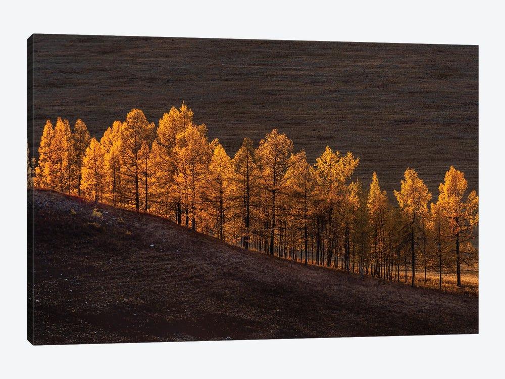Sunset Light by Haim Rosenfeld 1-piece Canvas Print