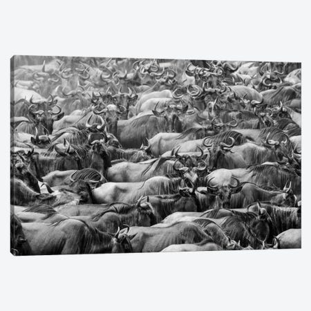 Wildbeests Canvas Print #OXM5579} by Henry Zhao Canvas Print