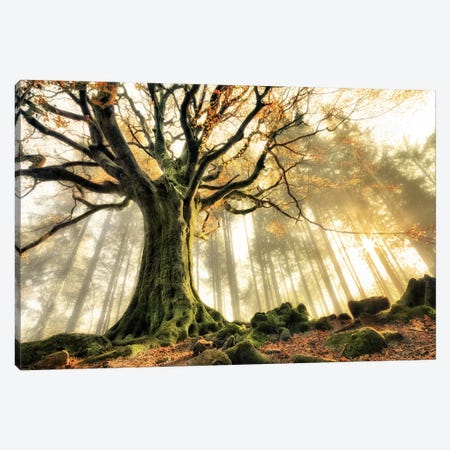 November Canvas Print #OXM557} by Christophe Kiciak Art Print