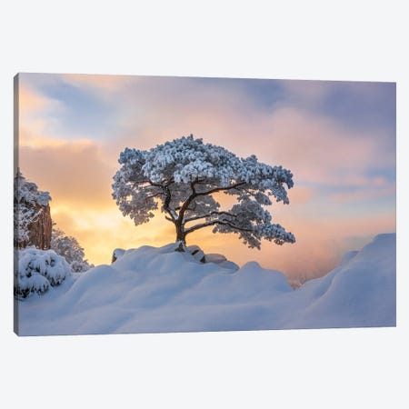 Cold Loner Canvas Print #OXM5586} by Jaeyoun Ryu Canvas Art Print