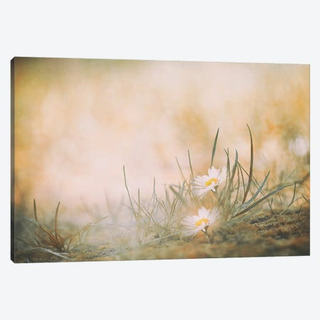 Untitled Canvas Print #OXM5588} by Jana Ajlec Canvas Artwork